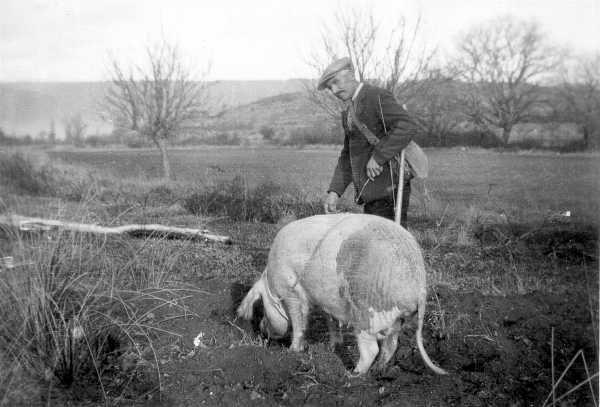 'Le Palud' cherchant les truffes