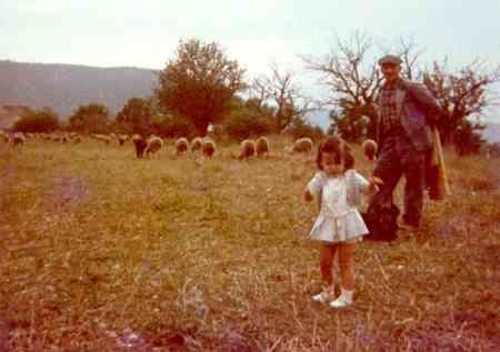 Les moutons du 'Barda', route de Bauduen