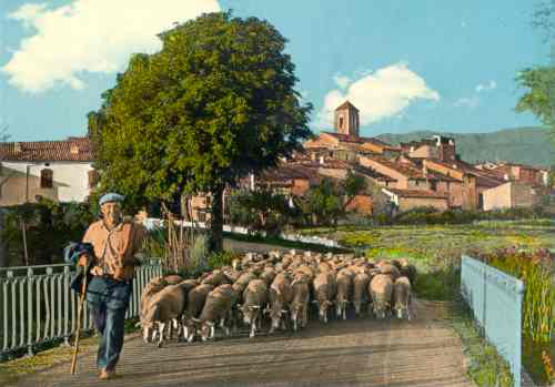 Les moutons du 'Barda', pont du Riou